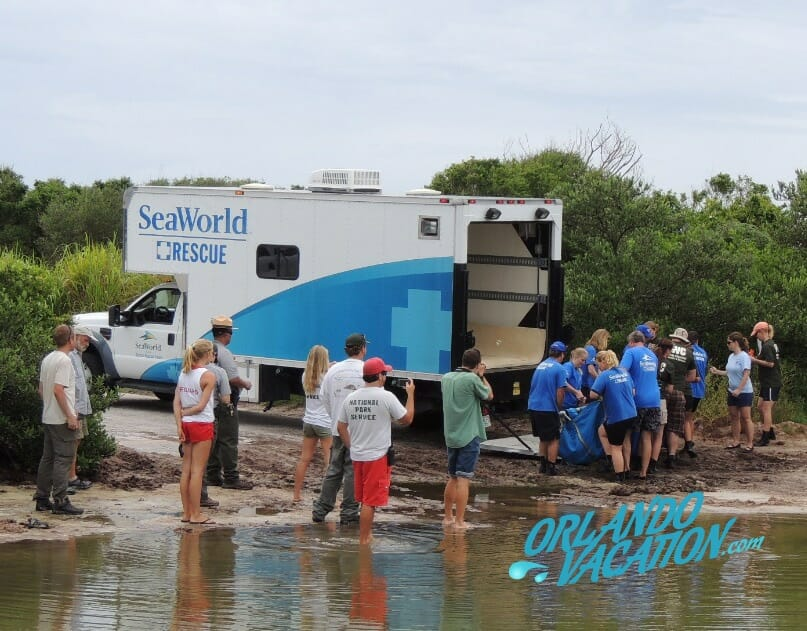 seaworld-animal-rescue