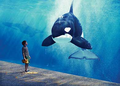 SeaWorld Orlando Discount Packages