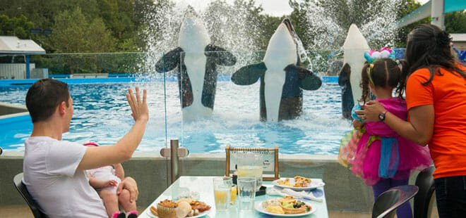 SeaWorld Dine With Shamu