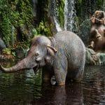 Animal Kingdom for Infants