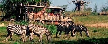 Animal Kingdom - Orlando