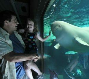 Beluga Interaction Program - SeaWorld Orlando 101