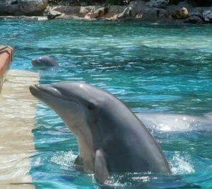 Dolphin Cove - SeaWorld Orlando 101