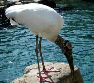 Pacific Point Preserve - SeaWorld Orlando 101