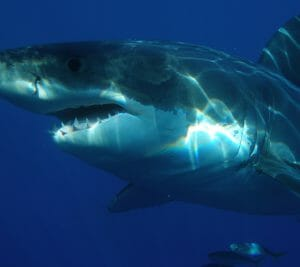 Sharks Deep Dive - SeaWorld Orlando 101