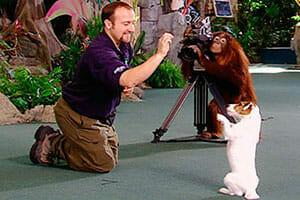 Animal Actors on Location Universal Studios