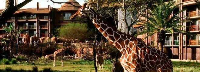 animal kingdom disney world