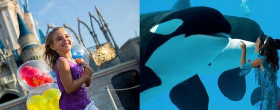 Disney World & SeaWorld 2 Day Vacation Package