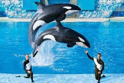 SeaWorld Orlando Planning Your Day