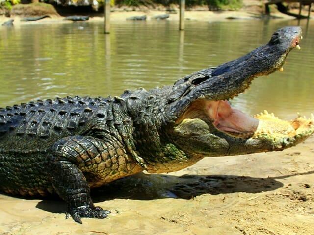 Wild Florida Adventure Park -Attraction-Orlando Vacation