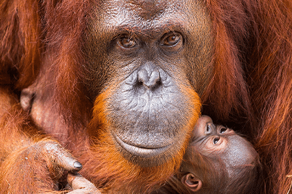 Zoo tampa - orlando attraction