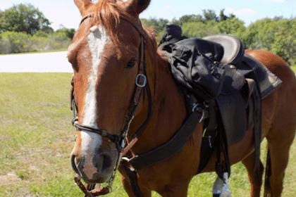 Horse Riding Orlando- orlando attraction