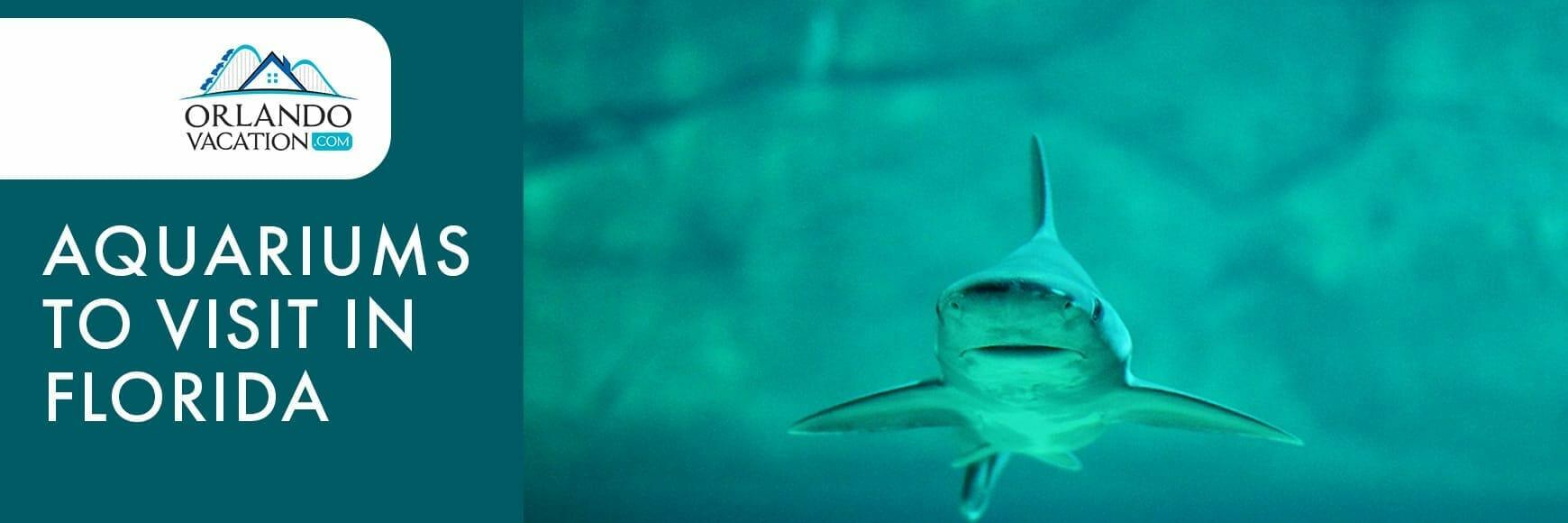 Aquariums To Visit In FL